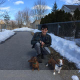 Dog Walker, Pet Sitter in Kingston
