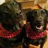 Flexible Pet Service Provider in Concord, New Hampshire