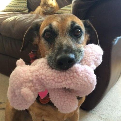Pet Care Provider Samantha W's Profile Picture