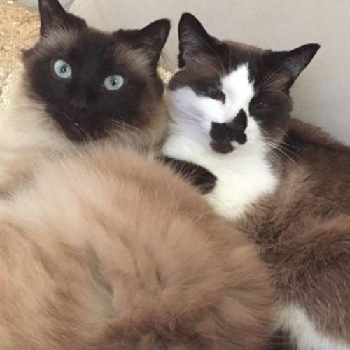 Pet Care Provider Emilie T's Profile Picture