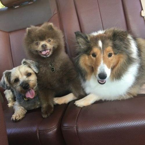 Pet Care Provider Lauren B Gallery Image 1