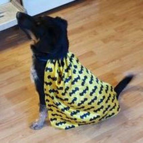 Pet Care Provider Laura Adamson's Profile Picture