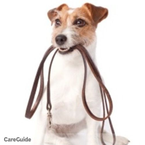 Pet Care Provider Austin M's Profile Picture