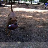 Dog Walker, Pet Sitter in Memphis