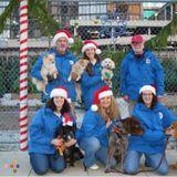 Dog Walker Job, Pet Sitter Job in Chicago