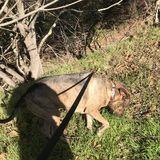 Responsible dog walker & dog sitter