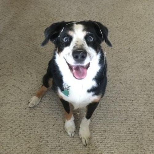 Pet Care Provider Darcie Carson's Profile Picture