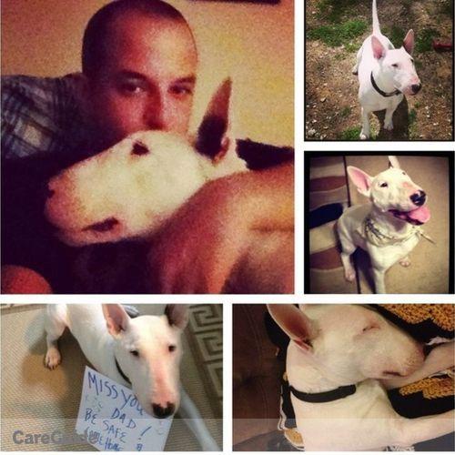 Pet Care Provider Nico Little's Profile Picture
