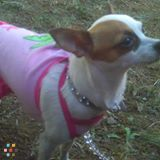 Dog Walker, Pet Sitter in Washougal