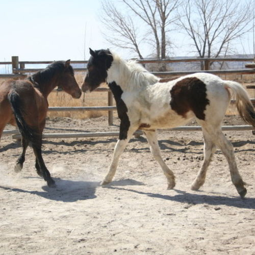 Pet Care Provider Lisa K Gallery Image 1