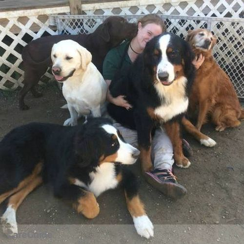 Pet Care Provider Meara S's Profile Picture