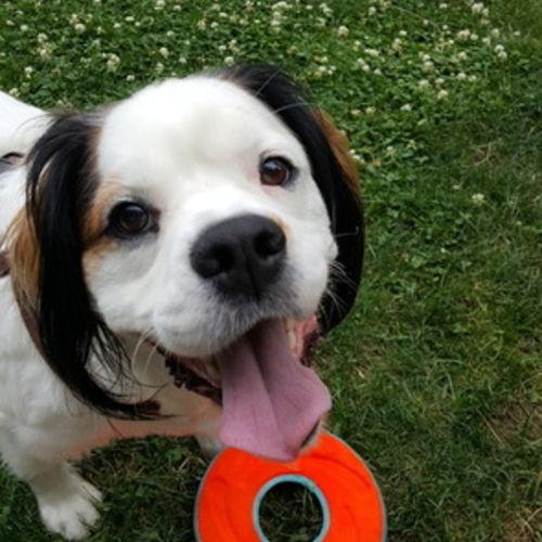 Pet Care Provider Deborah Watson's Profile Picture
