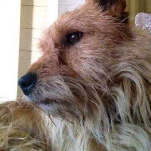 Pet Care Provider Sinead O Gallery Image 3