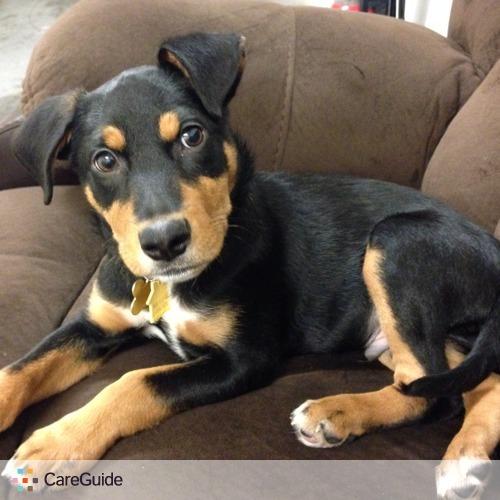 Pet Care Job Kristen Gradecki's Profile Picture