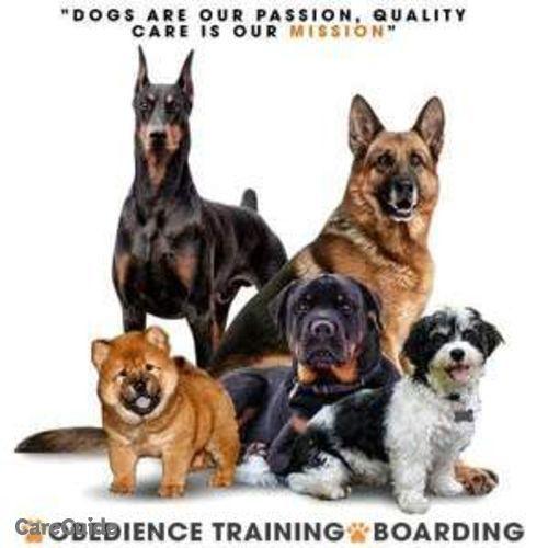 Pet Care Provider Paradise Paws VI's Profile Picture