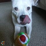 Dog Walker, Pet Sitter in White Plains