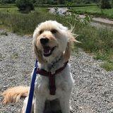 Needed: Squamish, British Columbia Dog Walker