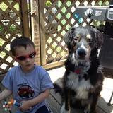 Dog Walker, Pet Sitter in Ansonia