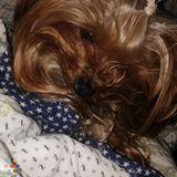 Dog Walker, Pet Sitter in Woodbury