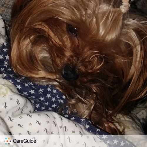 Pet Care Provider Caroline Toce's Profile Picture