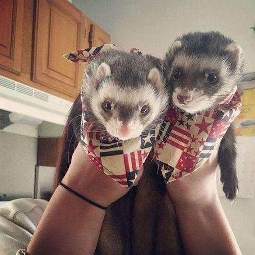 Pet Care Provider Katelyn M Gallery Image 3
