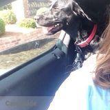 Dog Walker Job, Pet Sitter Job in Statesboro