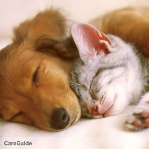Pet Care Provider Jazzmin McCormick's Profile Picture