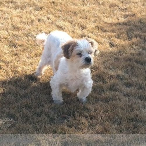 Pet Care Provider Wilma Sulz's Profile Picture