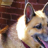 Needed: a Dedicated Pet Walker/Sitter in Murfreesboro, Tennessee