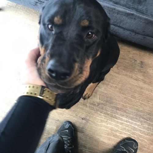 Pet Care Provider Max B Gallery Image 1