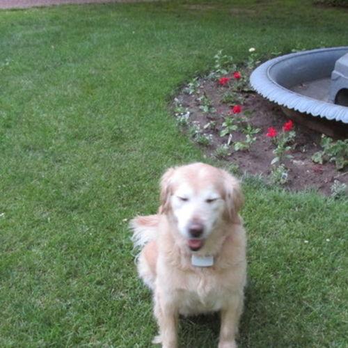 Pet Care Provider Kim Velez Gallery Image 2