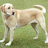 Dog Walker, Pet Sitter in Iowa City