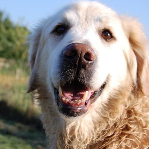 Pet Care Provider Big Yellow Dog Pet Services Gallery Image 3