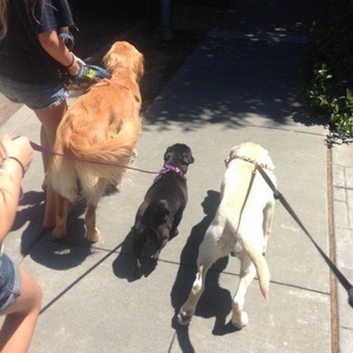 Pet Care Provider Julie M Gallery Image 3