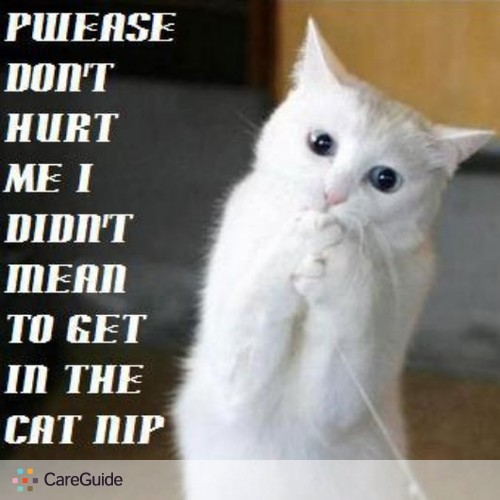 Pet Care Provider chelsea morton's Profile Picture