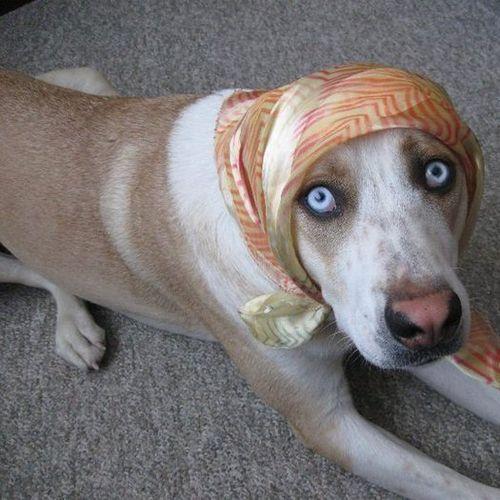 Pet Care Provider Steven Wesie Gallery Image 1