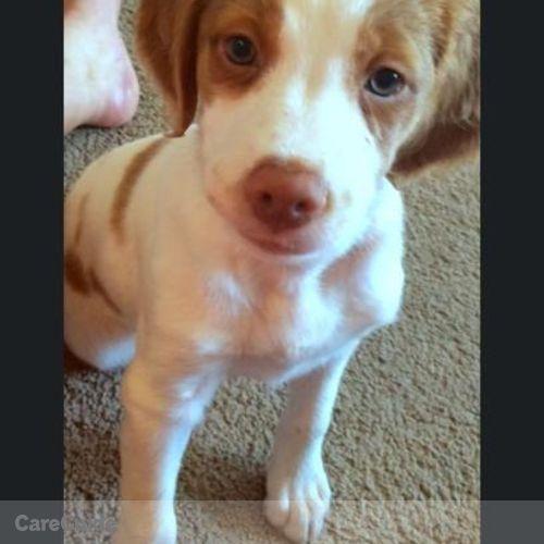 Pet Care Job Laura Rognerud's Profile Picture