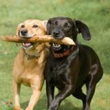 Dog Walker, Pet Sitter in Donna
