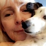 15+ Years Of Experience Caring For Dogs!