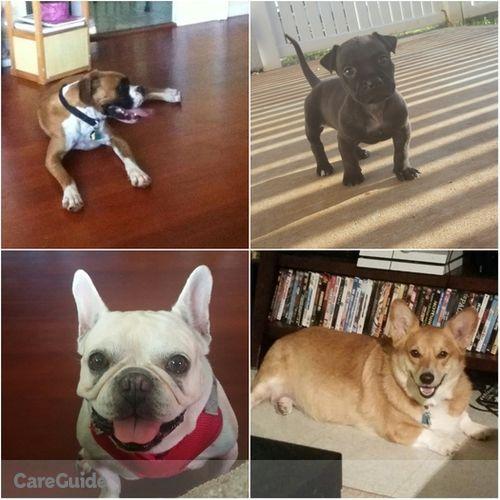 Pet Care Provider Angelica B's Profile Picture