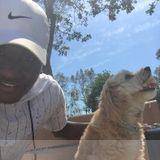 Dog Walker, Pet Sitter in Sandusky