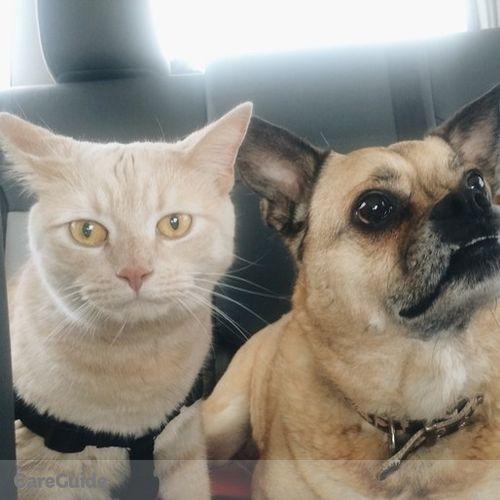Pet Care Job Jez Davis's Profile Picture