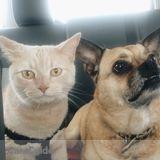 Pet Sitter Job in Orangeville