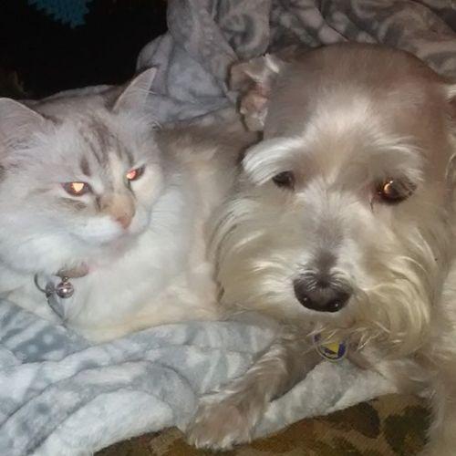Pet Care Provider Jade Mosher Gallery Image 2