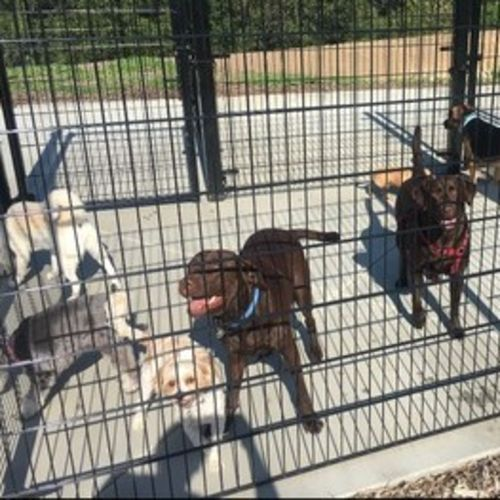 Pet Care Provider Tara Jaime Gallery Image 1