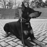 Pet Care Job in Richmond Hill