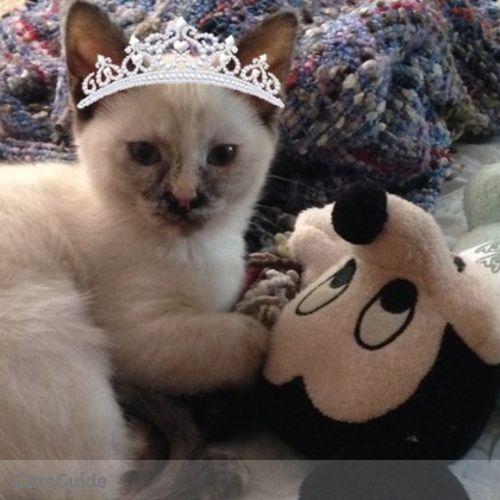 Pet Care Provider Veronica N's Profile Picture