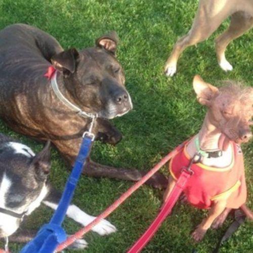 Pet Care Provider Samantha J Gallery Image 3
