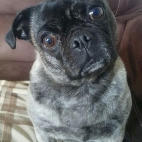 Pet Care Provider Carole L's Profile Picture