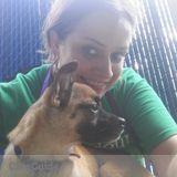 Dog Walker, Pet Sitter in Charleston